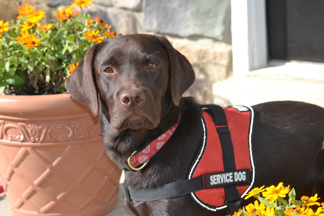 Diabetic Service Dog Breeds